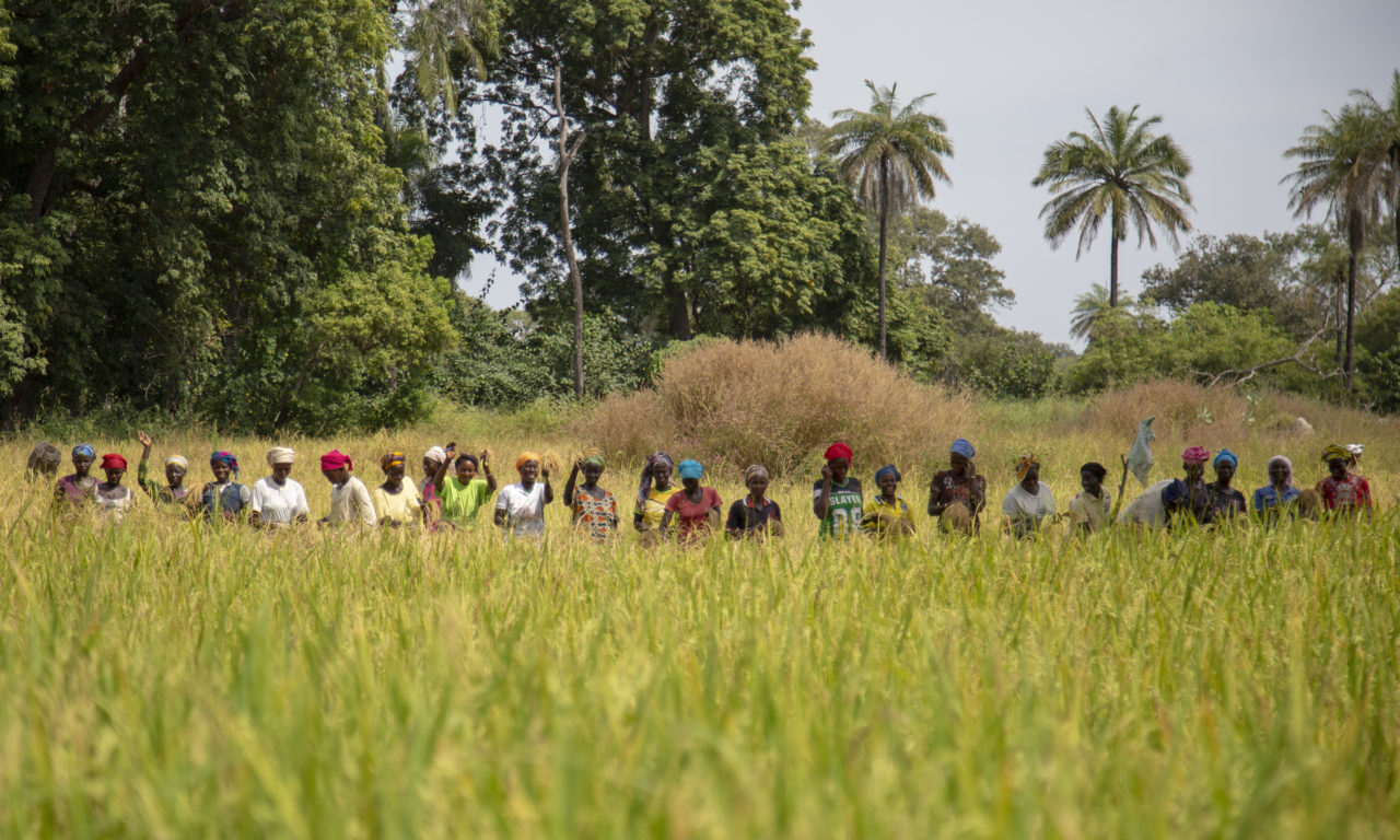 3r premi – Arrossars (Senegal)